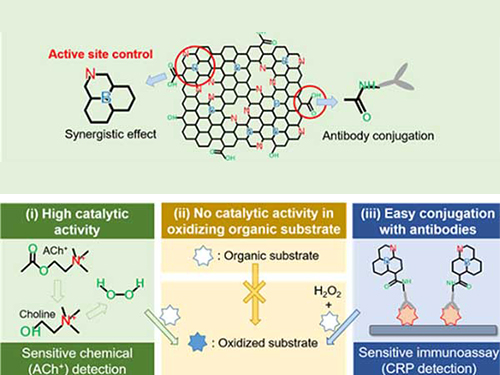 Nanomaterials Mimicking Natural Enzymes with Superior Catalytic Activity and Selectivity for Detecting Acetylcholine 이미지