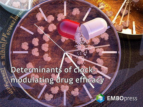 Mathematical Modeling Makes a Breakthrough for a New CRSD Medication 이미지