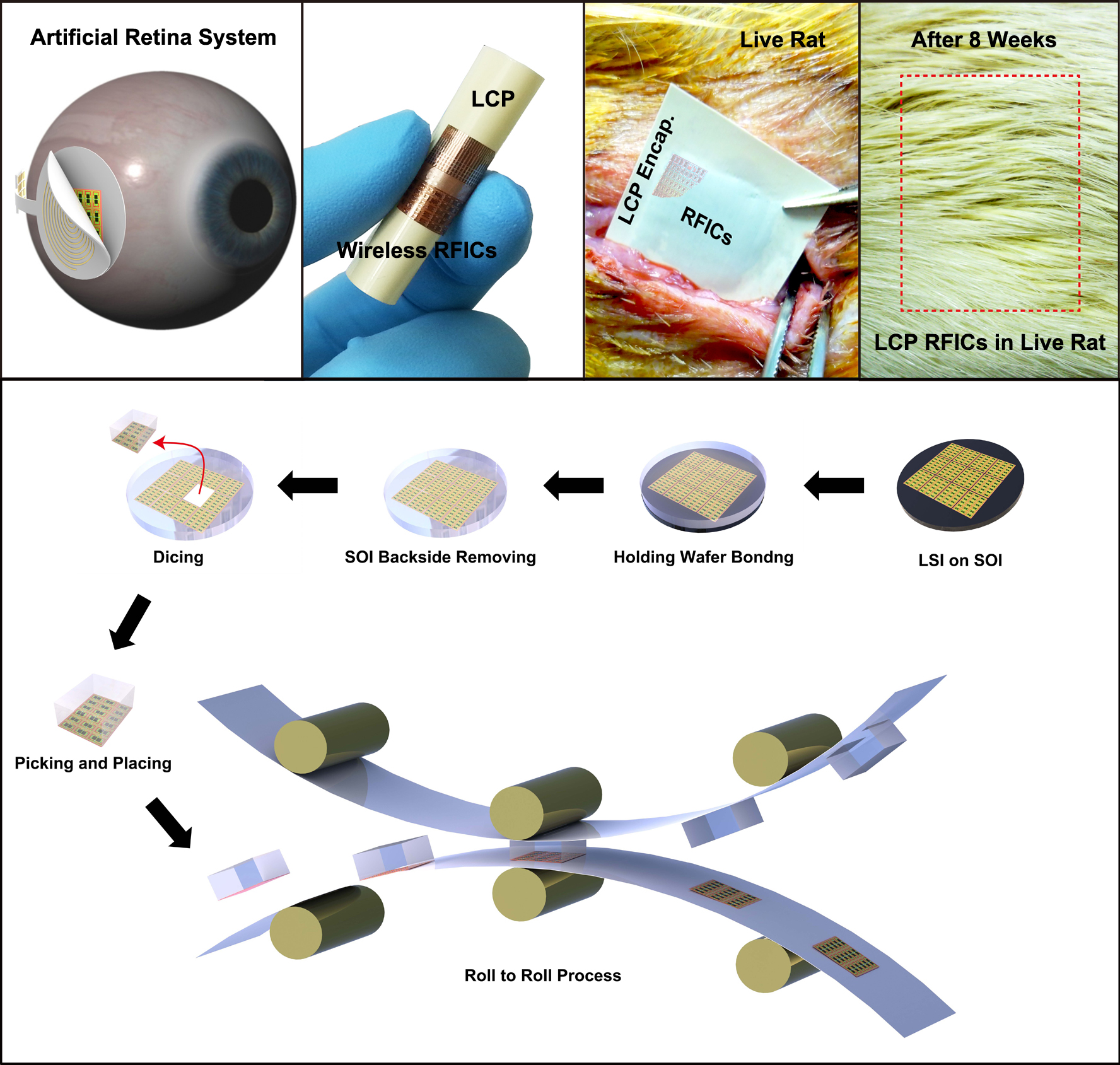 A KAIST research team developed in vivo flexible large scale integrated circuits 이미지