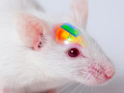 Wirelessly Rechargeable Soft Brain Implant Controls Brain Cells 이미지