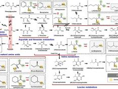 Expanding the Biosynthetic Pathway via Retrobiosynthesis 이미지