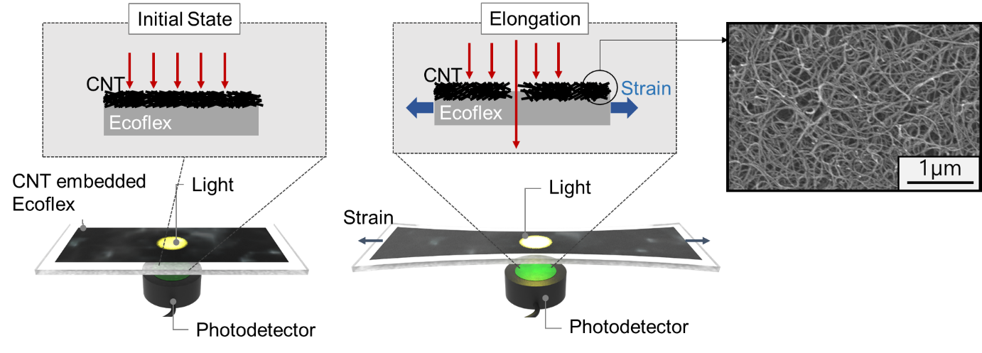Figure 2. Schematic diagram of the sensor based on the optical transmittance changes of the CNT-embedded Ecoflex thin film.