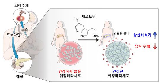 모유 수유의 당뇨병 예방 기전