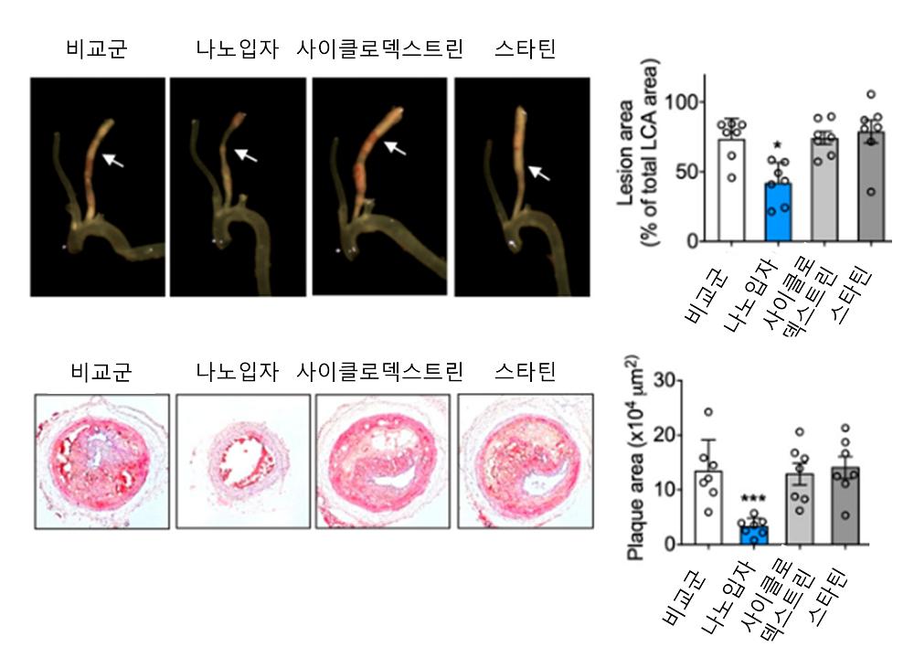 그림 3. 사이클로덱스트린-스타틴 나노입자의 플라크 치료 효과