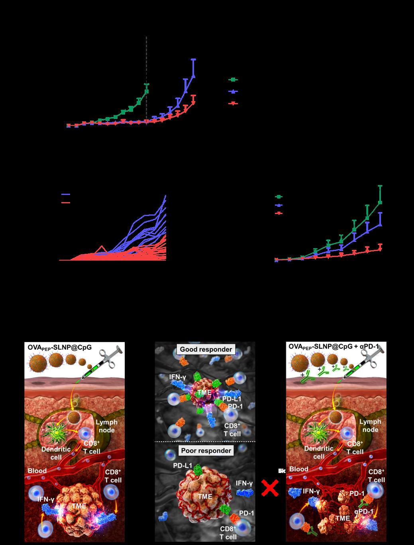 그림3. 항암 나노백신과 면역관용억제제 PD-1 항체의 순차적 병용을 통해 효과적으로 종양 성장과 종양 재발을 억제할 수 있음을 확인했다.
