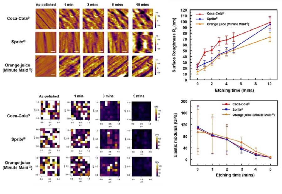 그림 2. 원자간력 현미경을 이용해 영상화한 청량음료에 노출된 치아 법랑질(enamel)의 표면 거칠기(위)와 탄성 계수(아래)의 변화 과정