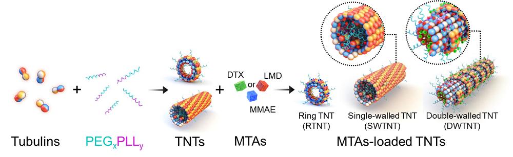 그림 1. 항암제가 탑재된 TNT(튜불린 나노 튜브)가 만들어지는 과정