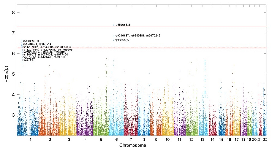 그림 1. 아밀로이드 및 타우 단백질과 독립적으로 인지저하를 일으키는 유전인자를 보여주는 그림