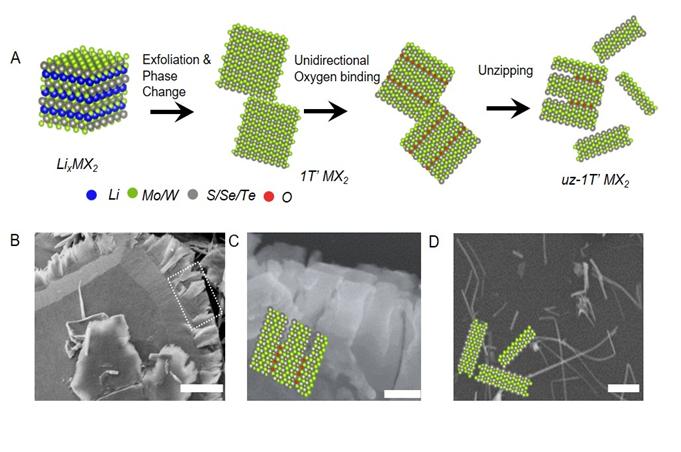 그림 2. 절개 공정의 간략한 모식도와 각각의 절개 과정에 대한 전자현미경 이미지