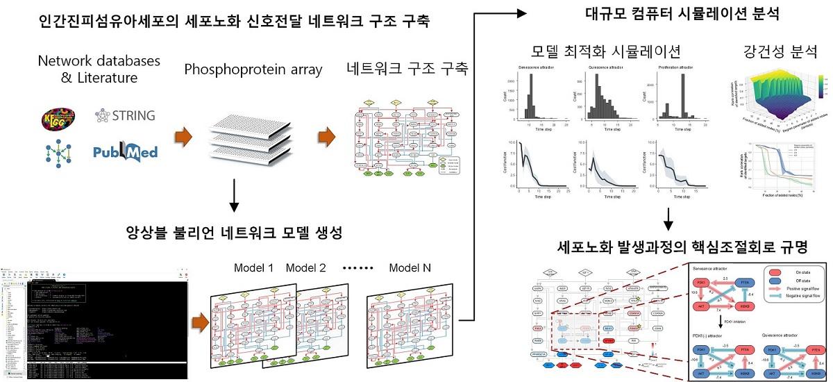 그림 2. 앙상블 불리언 네트워크 모델링 및 대규모 컴퓨터 시뮬레이션 분석 모식도