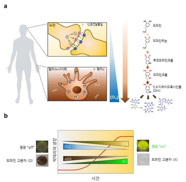 그림 1. 도파민의 중합반응 과정과 박테리아의 생장, 용존 산소량, 형광나노입자 신호 그래프