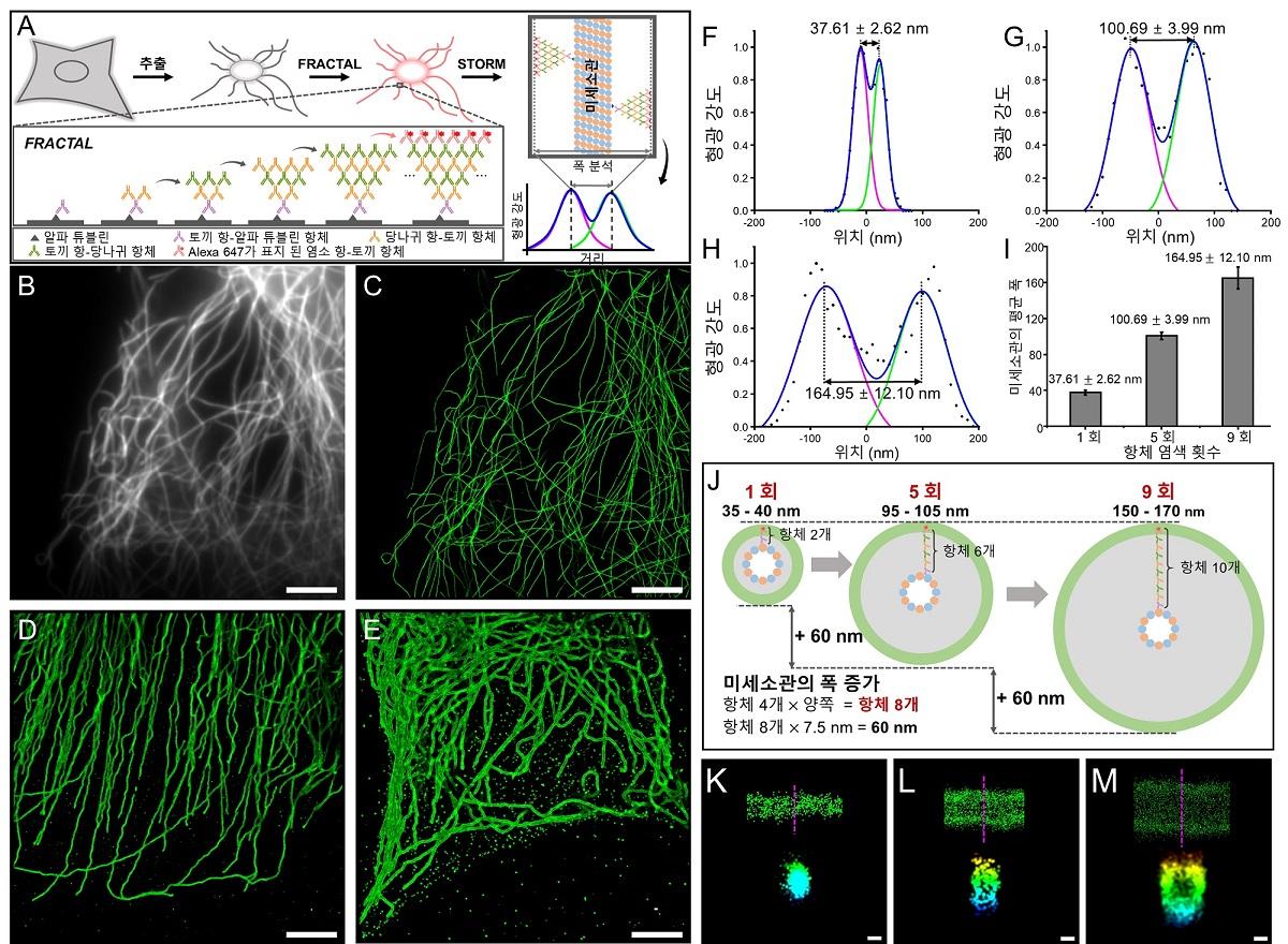 그림 3. FRACTAL을 적용한 미세소관의 3차원 미세 구조