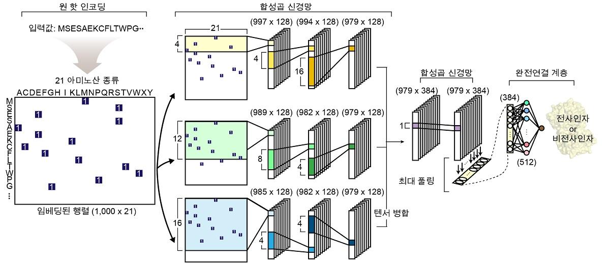 그림 1. 전사인자 예측을 위한 심층 학습 모델의 네트워크 구조