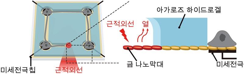그림 1. 나노 광열 신경 칩 플랫폼 모식도