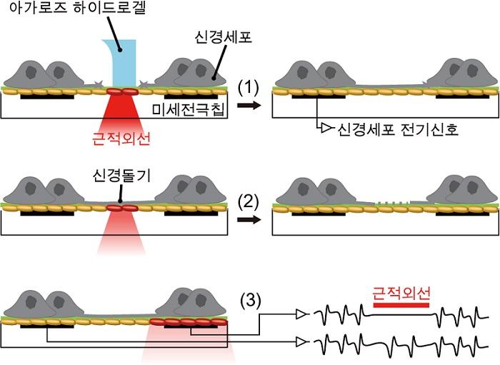 그림 2. 신경 네트워크의 구조 및 기능을 조절하는 세 가지 조작 기술 모식도