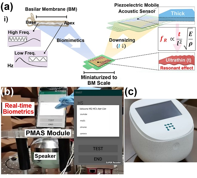 Figure: (a) Schematic illustration of the basilar membrane-inspired flexible piezoelectric mobile acoustic sensor (b) Real-time voice biometrics based on machine learning algorithms (c) The world's first commercial production of a mobile-sized acoustic sensor.