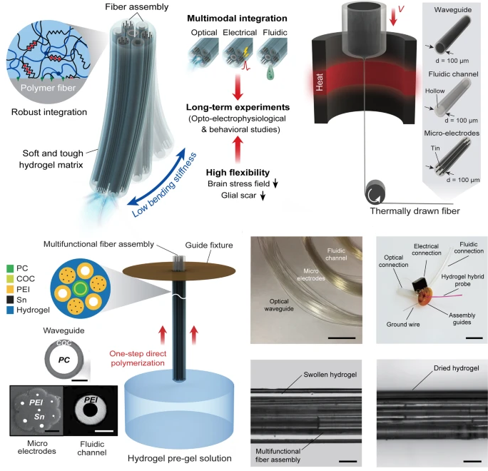 Figure 2. Design and Fabrication of Multifunctional Hydrogel Hybrid Probes