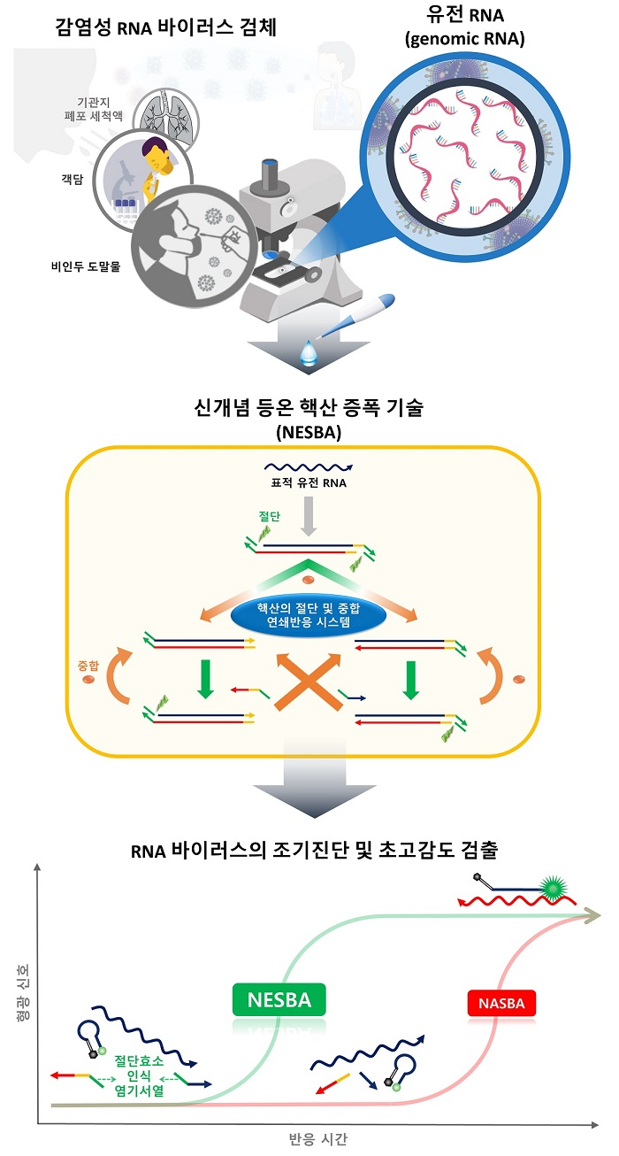 그림 1. RNA 바이러스 초고감도 검출 기술 연구 모식도